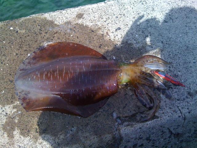 月刊釣りまとめ 2012-09